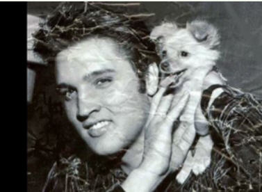 elvis-with-fox