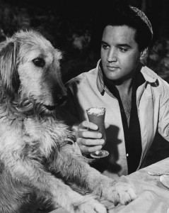 Elvis and dog
